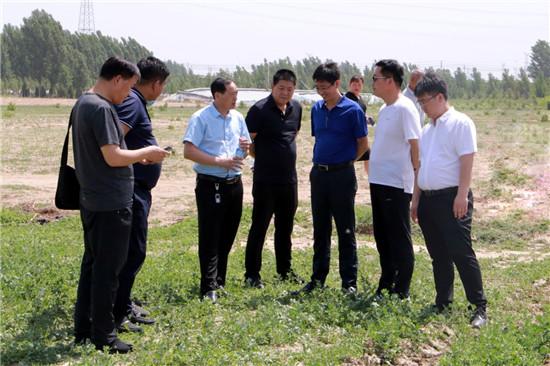 中牟县产业扶贫好项目——蒲公英种植 引来登封市考察团探讨交流